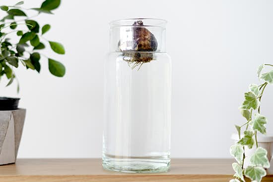 リューズガラス/球根ベース/花瓶(L)の商品写真