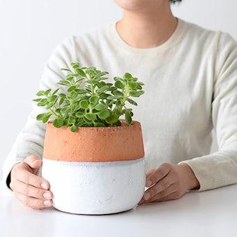 植木鉢/ポエル・M(径15cm)の商品写真