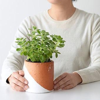 植木鉢/マルユトシリンダー・ホワイト(径11cm)の商品写真