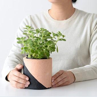 植木鉢/マルユトシリンダー・ブラック(径11cm)の商品写真