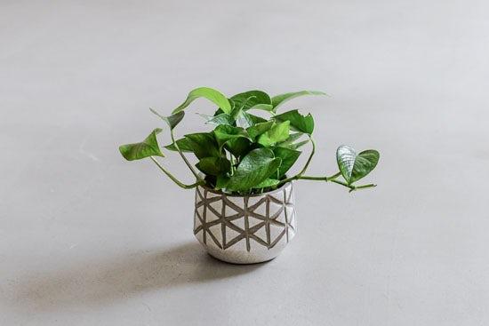 植木鉢/トライアングル・ホワイト(径14cm)の商品写真