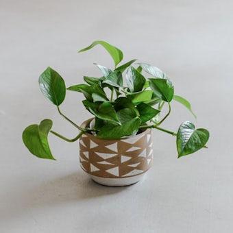 植木鉢/トライアングル・ブラウン(径14cm)の商品写真